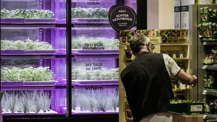 Zum selber Pflücken mitten im Laden: Ein Kasten mit einer Mini-Kräuterfarm im deutschen Supermarkt Edeka.