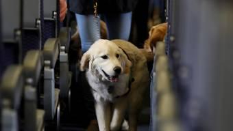 Auch ein Hund braucht für die Reise einen Pass. (Symbolbild)
