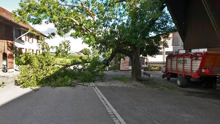 Auf dem Schlierenberg beim Bauernhof Rütschi riss eine Windböe einen Ast vom Baum.
