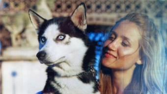 Husky Lycos wird vermisst