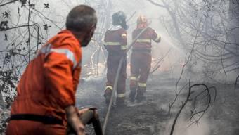 Waldbrand in Italien
