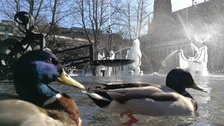 die Ente fühlen sich pudelwohl
