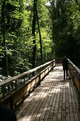 Der Erlebnissteg führt mitten durch den Auenwald, der für die Bevölkerung normalerweise nicht zugänglich ist