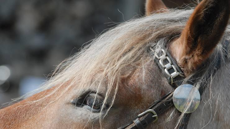 Aus bisher unbekannten Gründen erschrak das Pferd der 47-Jährigen und sprang zur Seite. (Symbolbild)