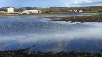 Mit Absicht überschwemmt worden ist dieses Ackerland bei Yverdon-les-Bains. Nun können dort Watvögel, die von Afrika nach Nordeuropa zurückkehren, eine Rast einlegen.