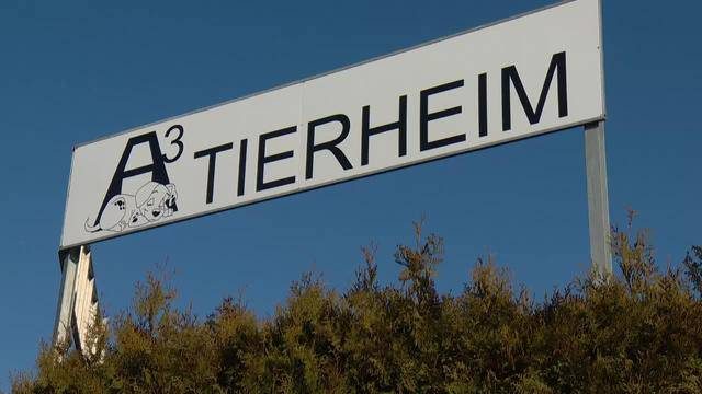 Aus dem A3-Tierferienplatz Scherer in Mülligen / AG