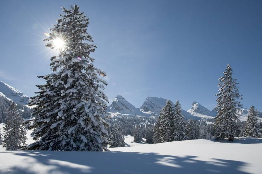 Ein Traumtag auf der Alp Sellamat. (Bild: Heinz Staffelbach/NZZ Bellevue)