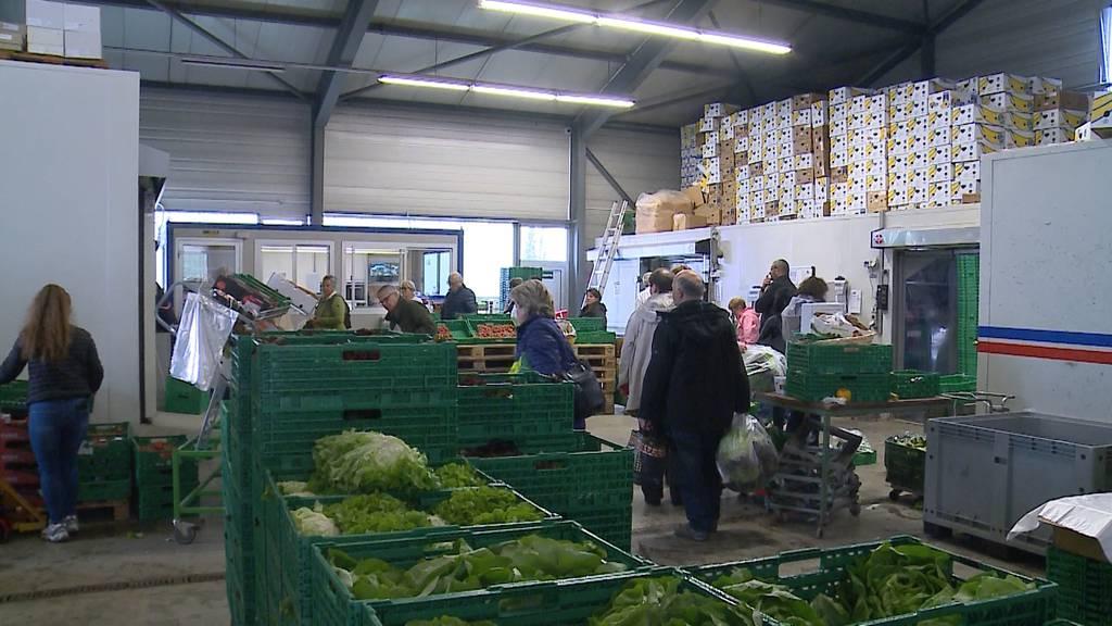 Salat für einen Franken: Ansturm auf Hofladen in Wohlenschwil