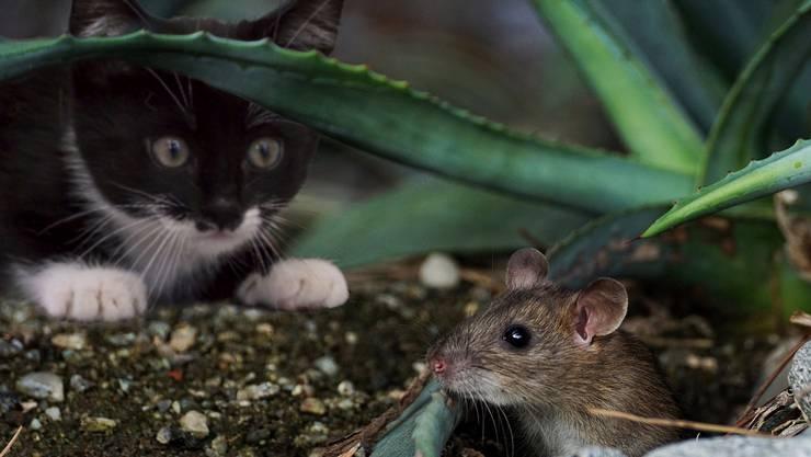 Insgesamt 759 Tiere wurden untersucht, davon stammt ein Grossteil aus den Fängen von Katzen.