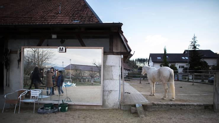 Für den Reittherapiehof  Cutohof ist es in Kyburg-Buchegg zu eng.