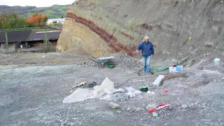Interessante Gesteinsführende Schichten in der Fricker Tongrube, wo die Reste von versteinerten Dinosauriers entdeckt wurden