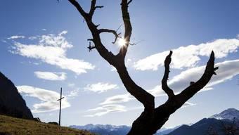 Ein alter Baum trotzt dem Föhnsturm (Archiv)