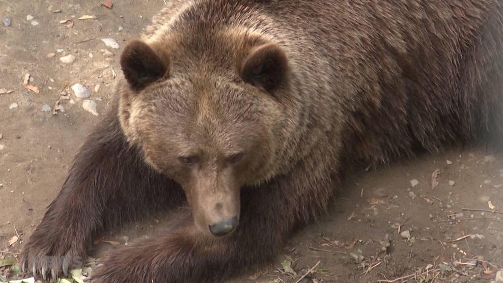 Geplanter Bärenpark sorgt für Kopfschütteln