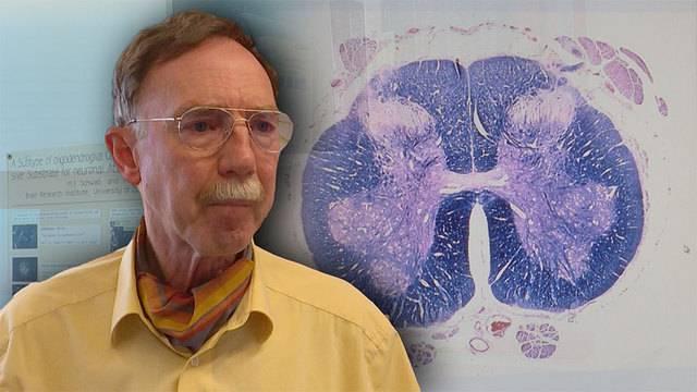 Antikörper als erfolgreiche Rückenmark-Therapie