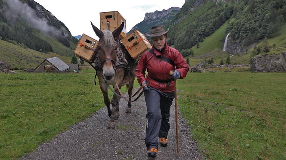 Giulia Kurer, Wandercoiffeuse im Alpstein (© TVO)
