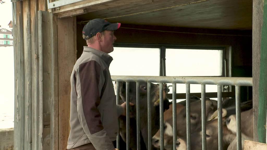 Wegen Corona: Bauern bleiben auf Kalbfleisch sitzen