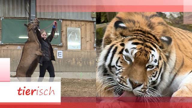 Vierbeinige Künstler / Liebesgeflüster im Zoo Zürich