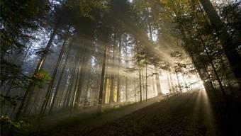 Der Wald, wie wir ihn kennen, ist von Menschenhand geschaffen.