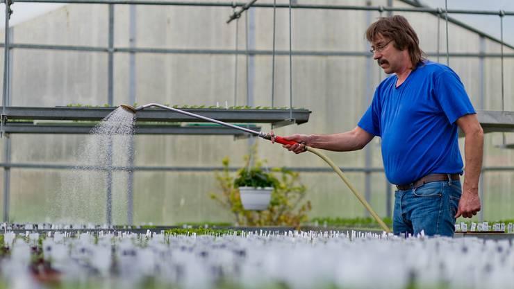 Peter Willmann arbeitete im Landwirtschaftsbetrieb. Jetzt hilft er in der Gärtnerei, wo er im Gewächshaus Setzlinge bewässert.Emanuel Freudiger