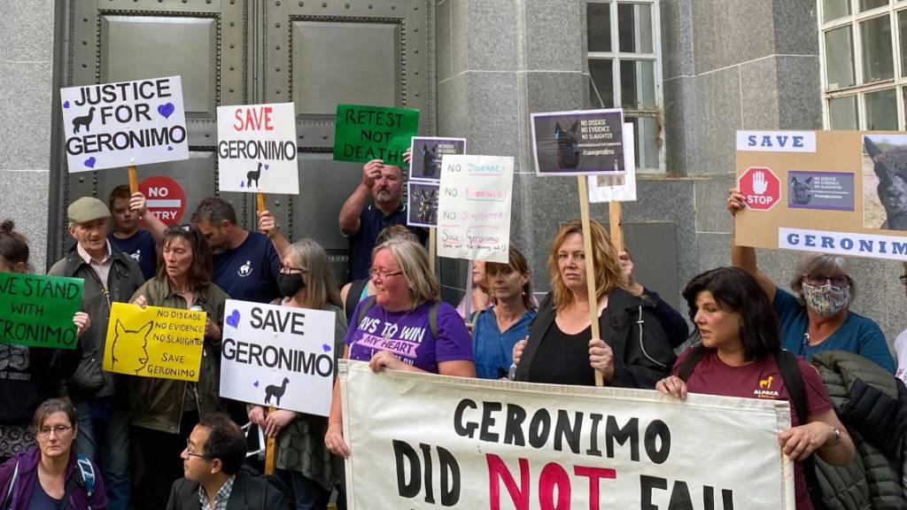 Demonstranten protestieren vor dem Umweltministerium gegen die angeordnete Einschläferung von Alpaka Geronimo. Mit einem Protestmarsch in London wollten Unterstützer für die Rettung des mutmaßlich an Rindertuberkulose erkrankten Alpakas Geronimo demonstrieren. Foto: Benedikt von Imhoff/dpa