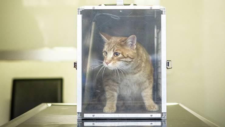 Die Tiere müssen sich zuerst an die neue Umgebung gewöhnen und von den Strapazen des Eingriffs erholen.