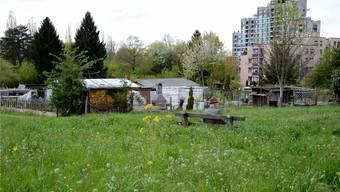 Das Ende einer Idylle auf Stadtgebiet – die Familiengärten an der Färberhüslistrasse werden auf Ende 2013 aufgelöst. Florian Niedermann