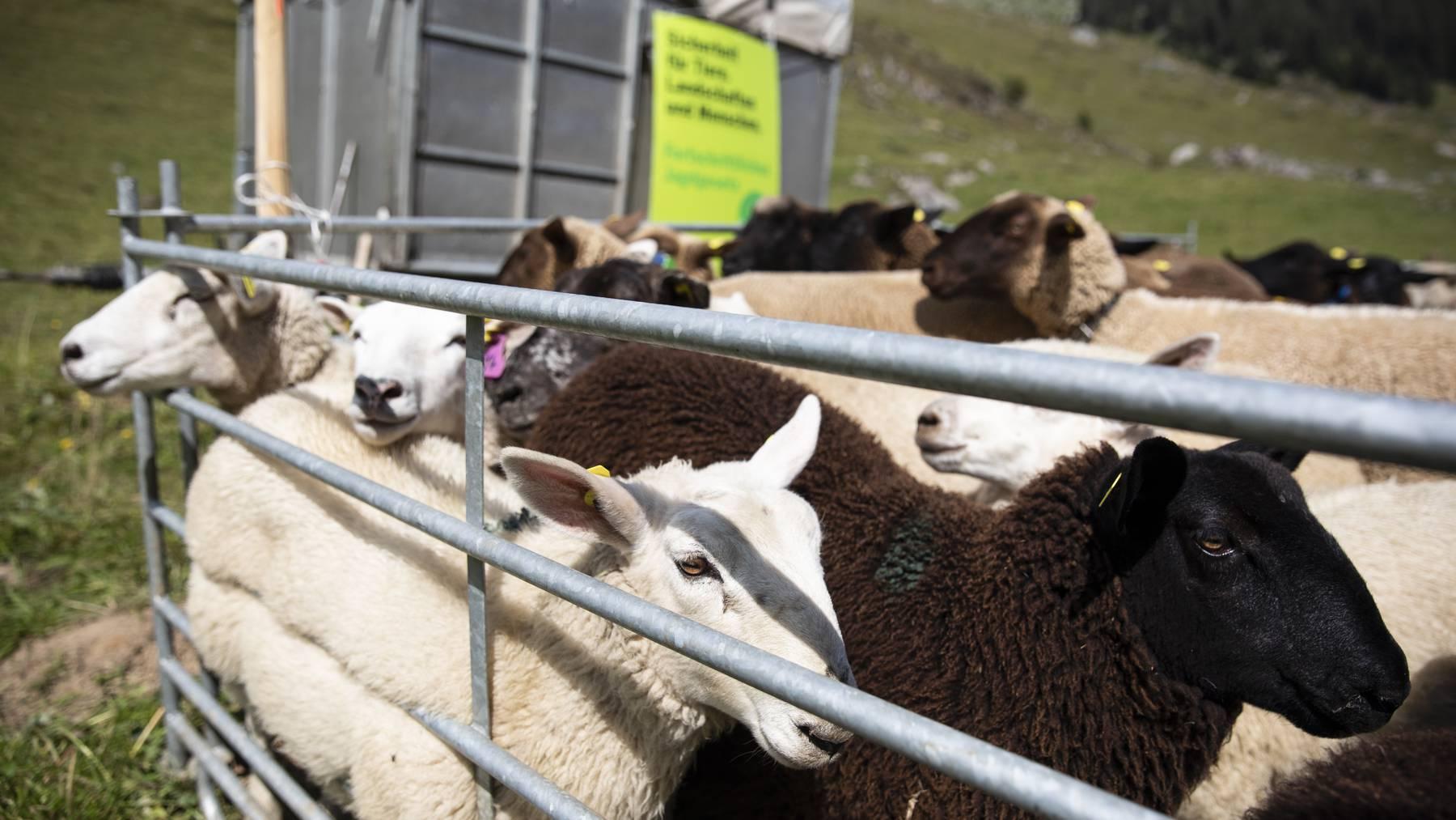 Die Bergler fühlen sich nach dem Nein zum Jagdgesetz im Stich gelassen.