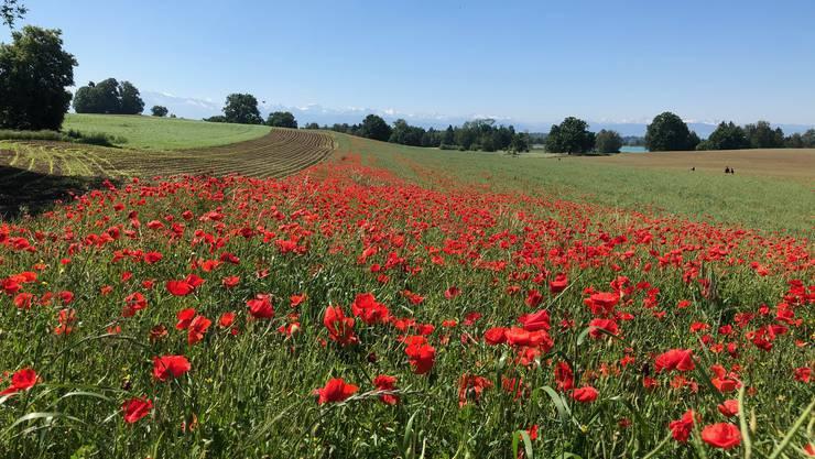 Sonne, Blumen, Tiere: Das sind die schönsten Leserfotos vom Pfingstwochenende