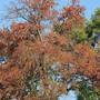 Die Trockenheit des vergangenen Sommers hat den hiesigen Bäumen enorm zugesetzt.