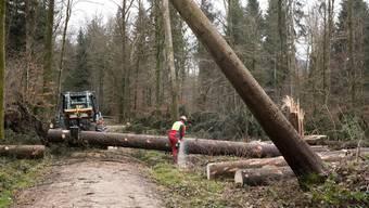 In Aargauer Wäldern sind nach den Stürmen im Januar die Aufräumarbeiten in vollem Gang. Wegen des nassen Bodens können die Forstarbeiter mit den schweren Maschinen nur auf den Wegen fahren.