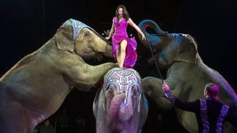 Circus Knie verzichtet auf den Auftritt der Elefanten in der Manege