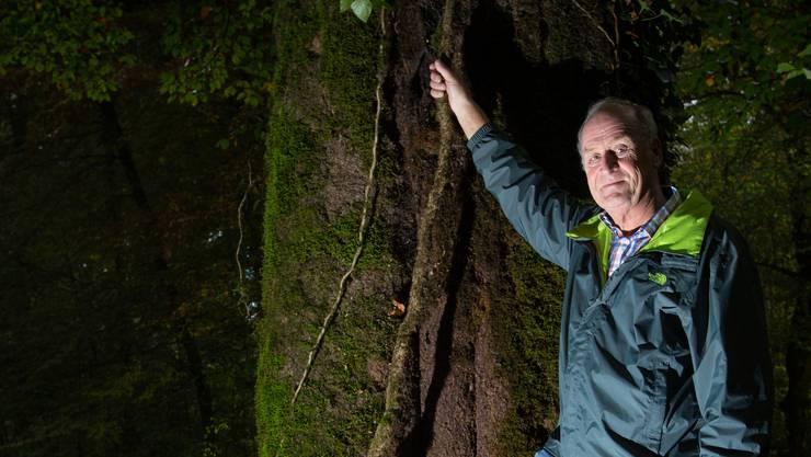 4,3 Meter Umfang: Willi Bürgi vor dem grössten Niederlenzer Baum.