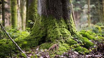 Der Aargauer Regierungsrat will das Waldgesetz ändern. (Symbolbild)