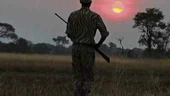 In diesem Jahr beobachten praktisch keine Touristen badende Nashörner oder schläfrige Leoparden. Dafür sind mehr Wilderer unterwegs.