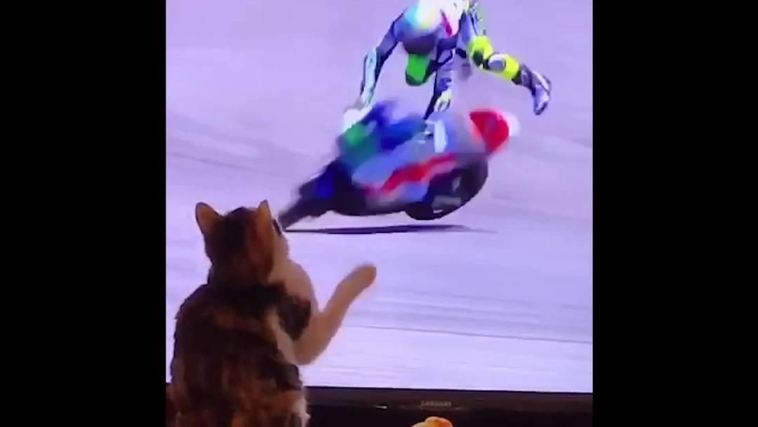 Superkräfte? Diese Katze lässt Motorradfahrer stürzen!