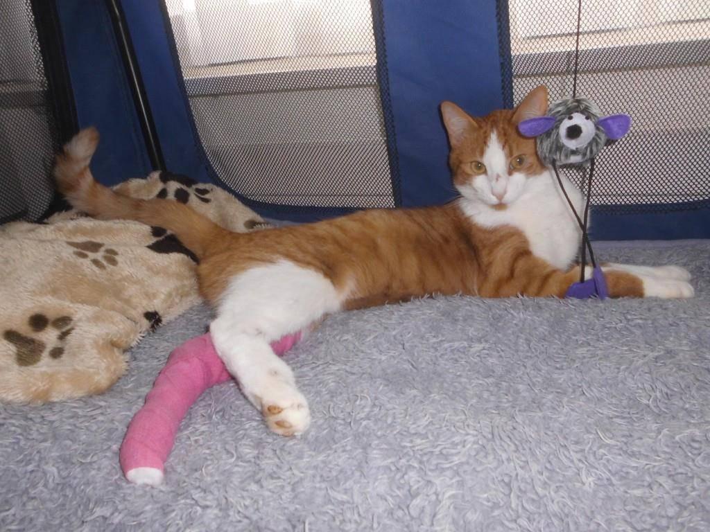 Der Kater erholt sich von seinen Verletzungen (© zVg)