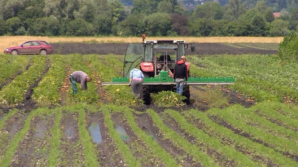 Klimaschutz in der Landwirtschaft: Konsumenten müssen mithelfen