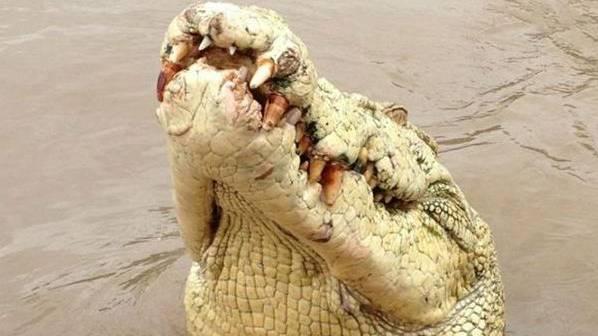 «Michael Jackson», das Albino-Krokodil im Norden Australiens war eine Lokalberühmtheit.