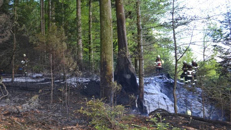 Unterhalb des Dietschibergs in Luzern sind über 1000 Quadratmeter Wald verbrannt.