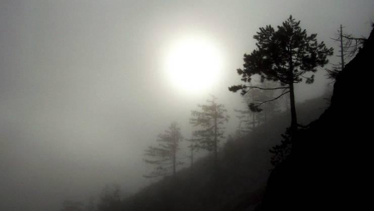 Nadelbäume bei Puke im Norden Albaniens (Archiv)