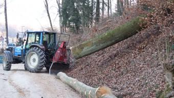 750 Hektaren Wald betreut der Forstbetrieb der drei Gemeinden Aarau, Biberstein und Unterentfelden.