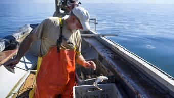 Den Fischern am Genfersee sind 2017  deutlich weniger Fische ins Netz gegangen. Das Minus beträgt knapp 20 Prozent. (Archiv)