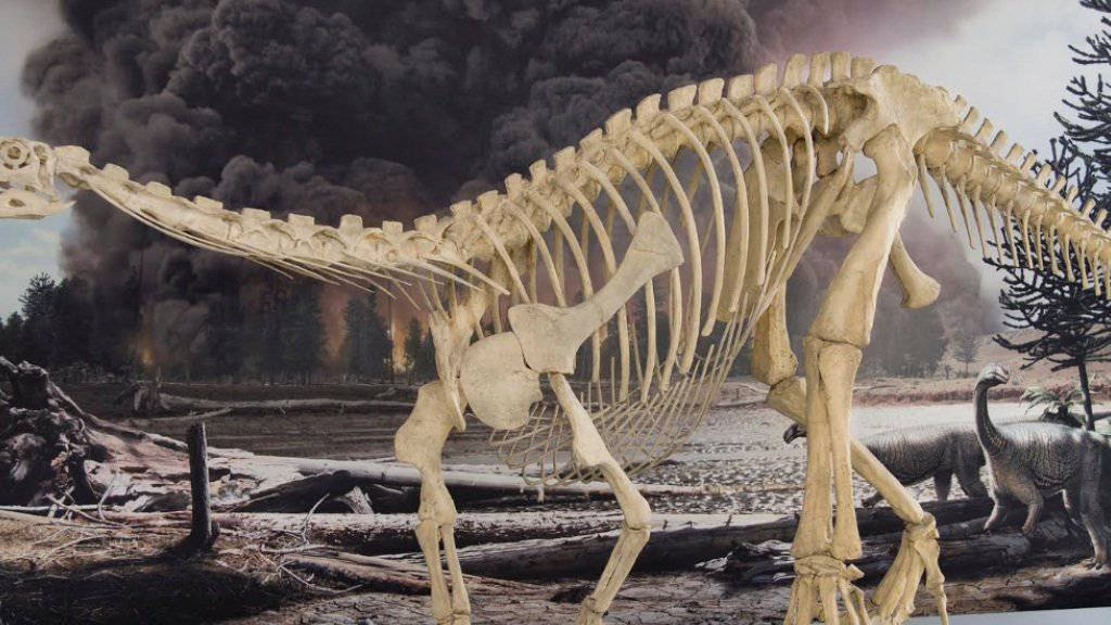 Plateosaurier vor neuer naturgetreuer Kulisse im Naturhistorischen Museum Bern.