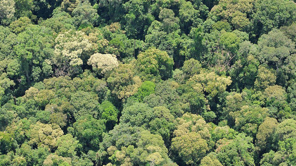 Geschädigte Tropenwälder erholen sich dank Renaturierung schneller