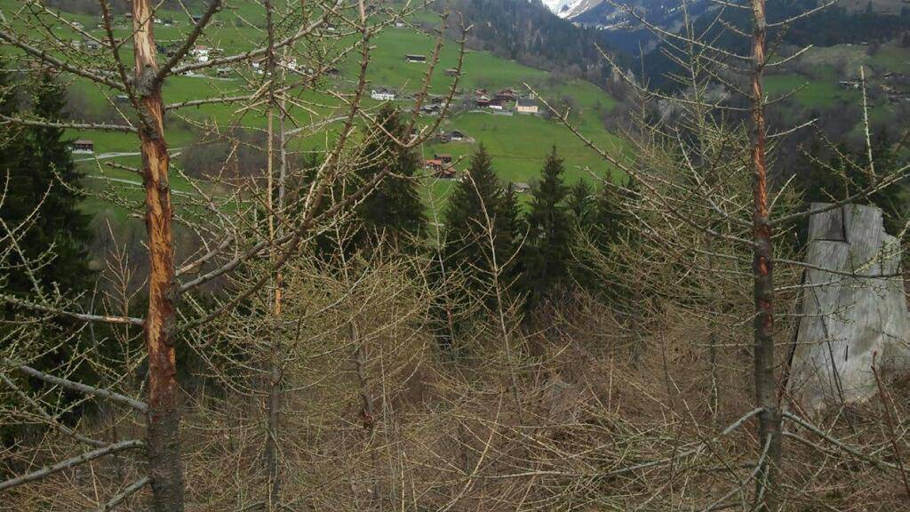 Bündner Wälder in schlechtem Zustand