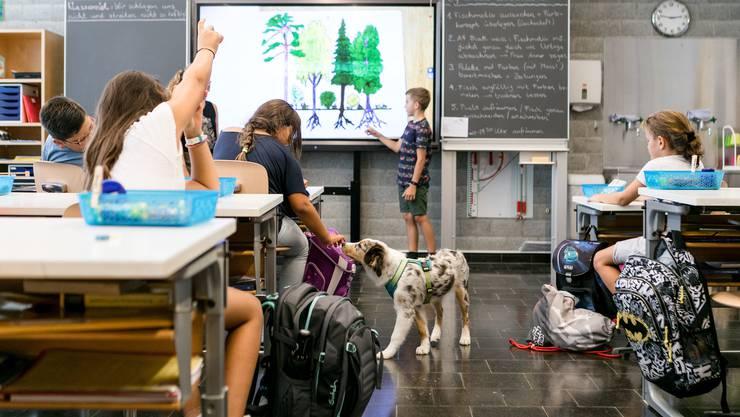 Ruby bereichert als Schulhund den Unterricht in der Primarschule Oberrohrdorf.