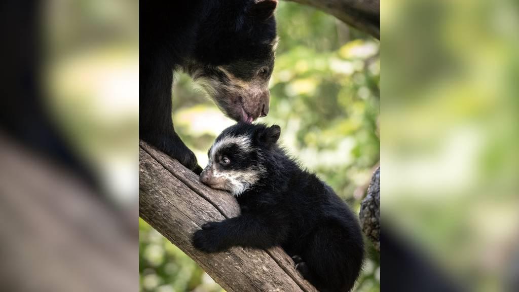 Unerwarteter Nachwuchs im Zürcher Zoo