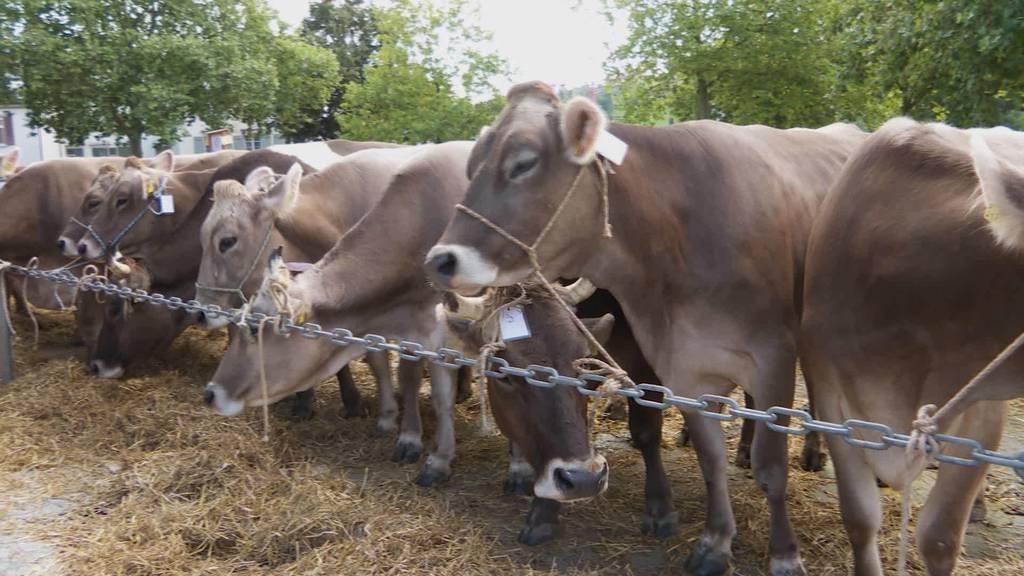 Grosser Tag in AR: Erste Viehschau der Saison in Herisau