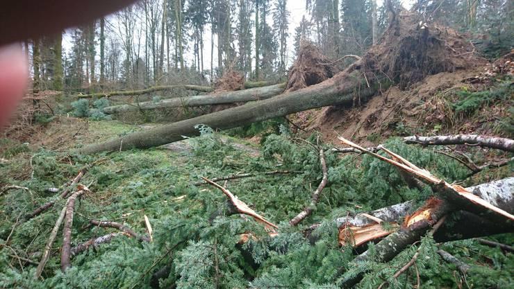 Dieses Bild bot sich der Forstbetriebsgemeinschaft Region Seon zum Jahresbeginn 2018.
