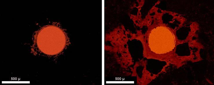 In dichterem Zementstein (links) ist die Korrosion (rötlich eingefärbt) weniger stark als in einem durchlässigeren Porensystem.
